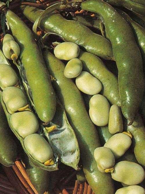 Tasty beans