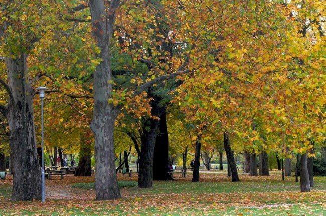 Varosligeti park