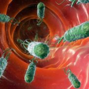 Wonderful bacteria
