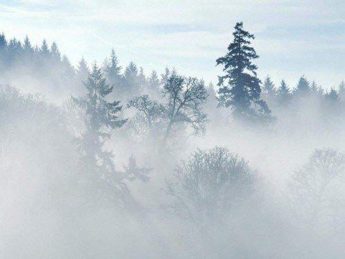 Wonderful fog