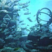 Amazing Atlantis