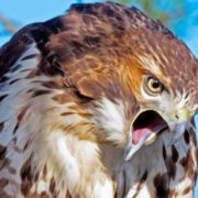 Awesome Bird of Prey