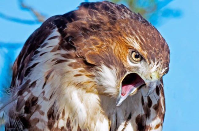 Awesome Bird of Prey