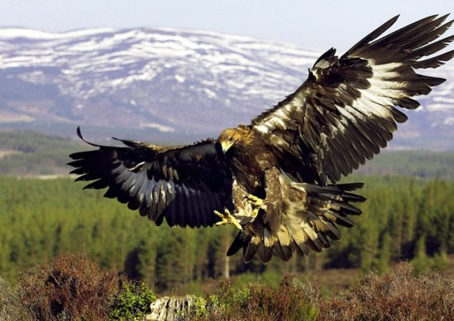 Charming Bird of Prey