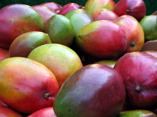 Charming mangoes