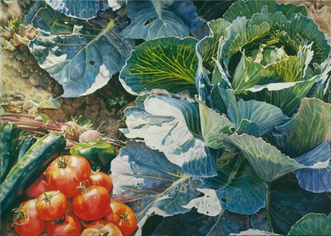 Fran Hardy. Bislet Cabbage