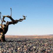 Great Gobi Desert