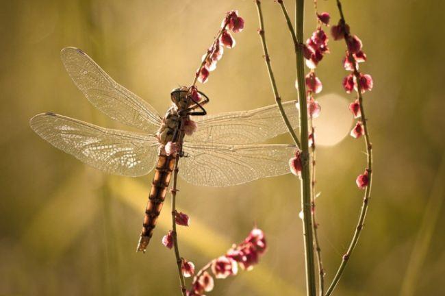 Interesting dragonfly by Fabien Bravin