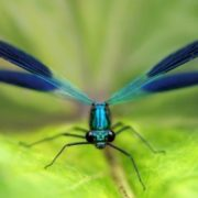 Lovely dragonfly by Jimmy Hoffman