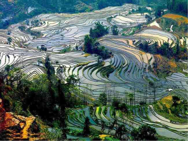 Magnificent rice terraces