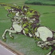 Napoleon on the rice field