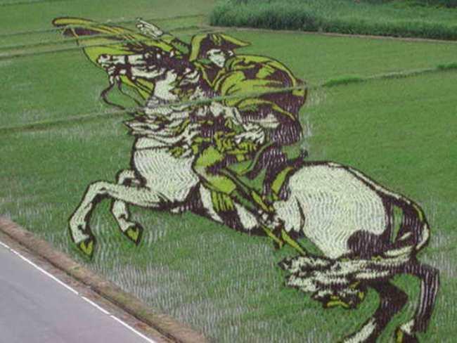 Napoleon on the rice field