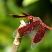 Pretty dragonfly