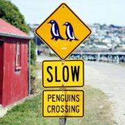 Slow Penguins Crossing