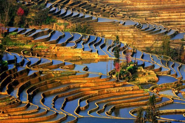 Stunning rice terraces