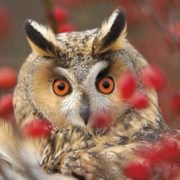 Wonderful owl