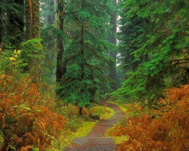 Charming conifer