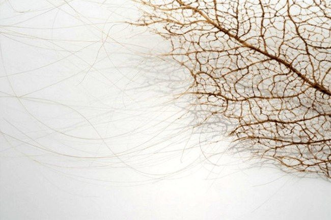 Charming leaves made of human hair by Jenine Shereos