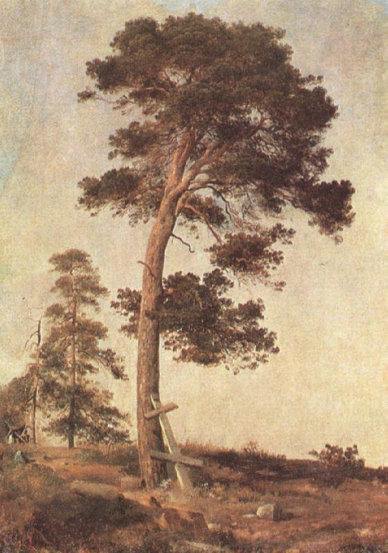 Ivan Ivanovich Shishkin. Pine in Valaam. 1858