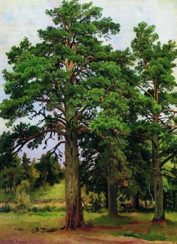 Pine without sun. Shishkin Ivan Ivanovich