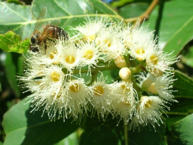 Stunning eucalyptus
