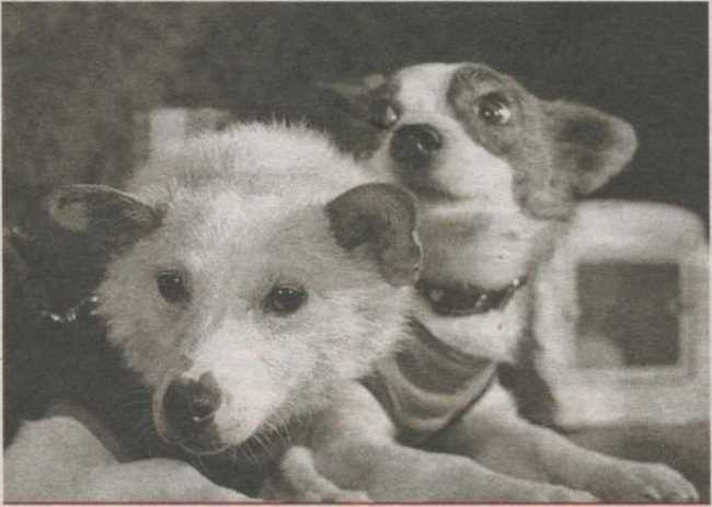 After the flight Belka and Strelka became folk favorites