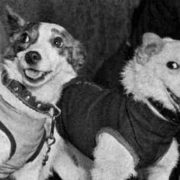 Belka and Strelka