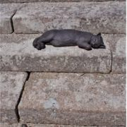 Cats on the steps in the UK