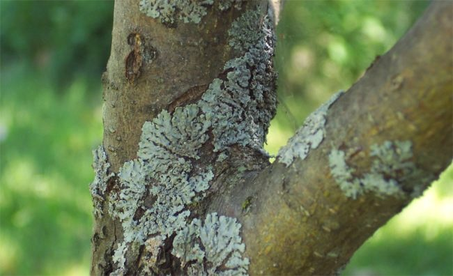 Mold on the tree