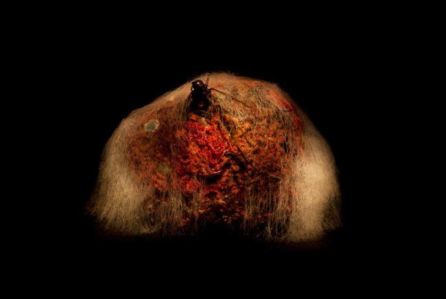 Moldy beet by Heikki Leis