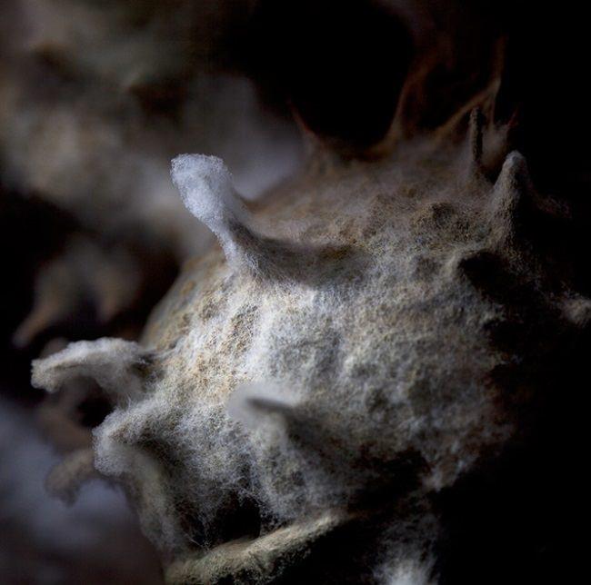Moldy chestnut by Heikki Leis
