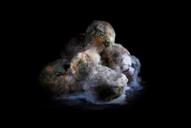 Moldy potatoes by Heikki Leis