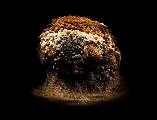 Moldy turnips by Heikki Leis