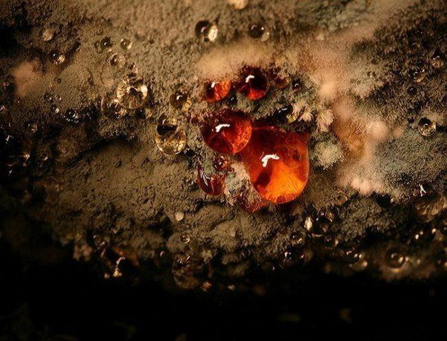 Potato mold by Heikki Leis