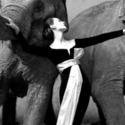 Richard Avedon, Dovima and the Elephants, $ 1.15 million