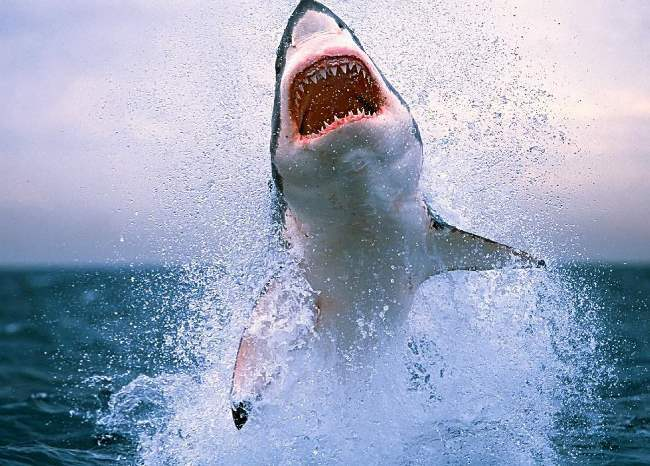Sharp teeth of a shark