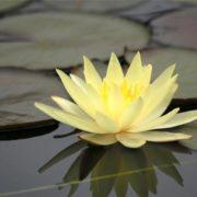 Stunning lily