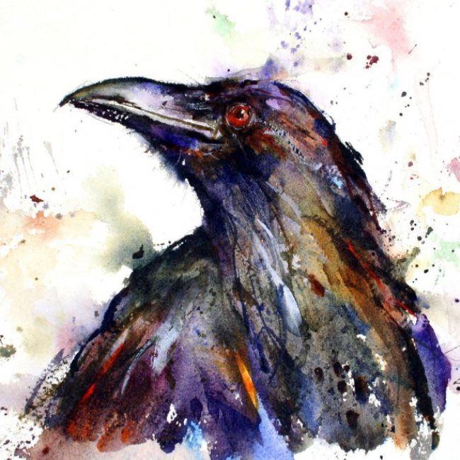 Stunning crow