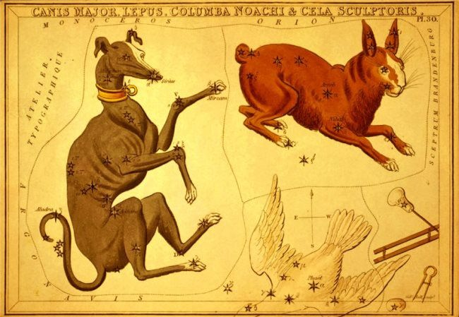 Canis Major and Lepus
