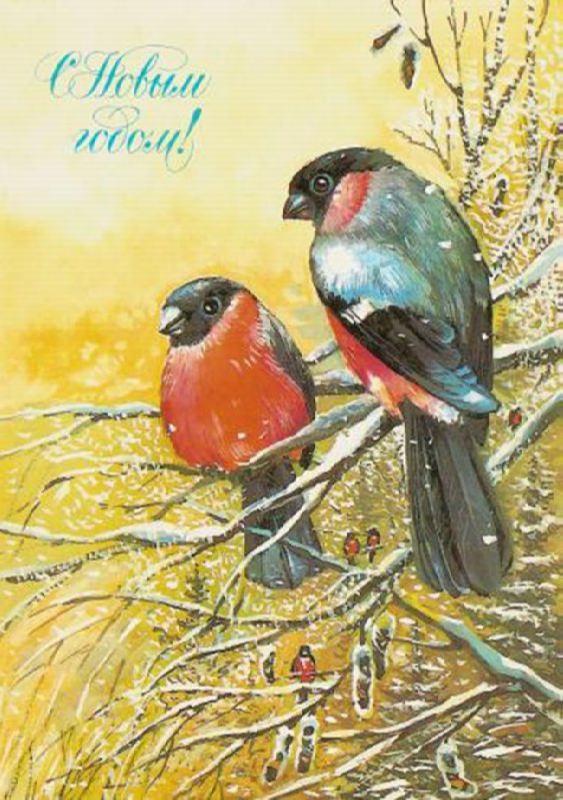 Charming bullfinches