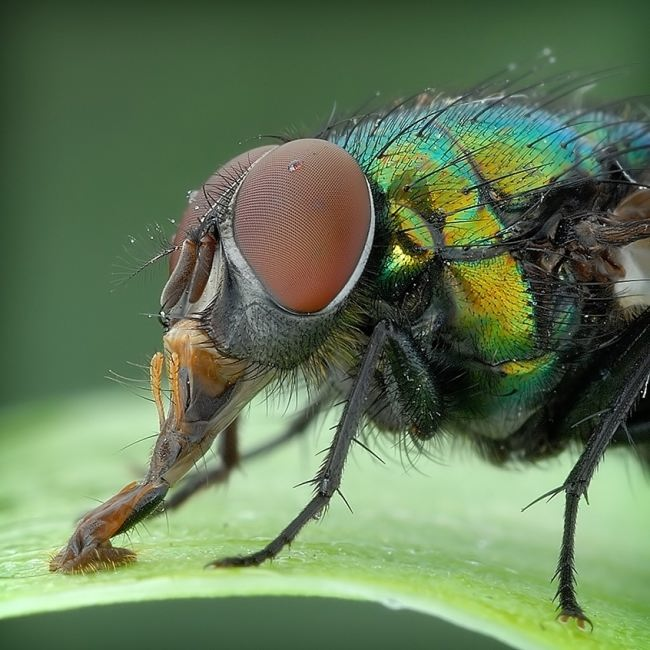 Charming fly