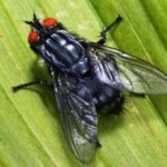 Fly – annoying insect