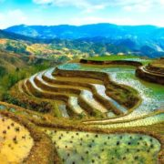 Phillipine eighth wonder of the world - rice terraces