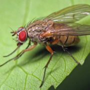 Pretty fly