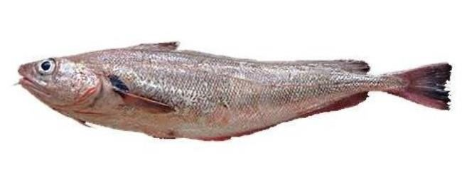 Red cod