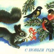 Squirrel and birds