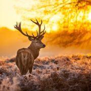 Amazing deer
