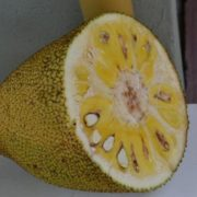 Amazing jackfruit