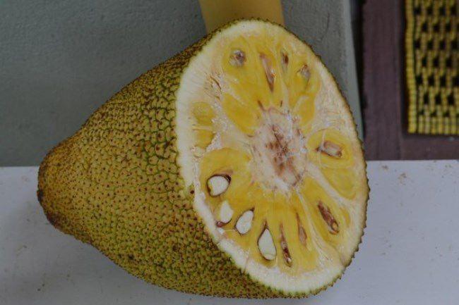 Amazing jackfruit