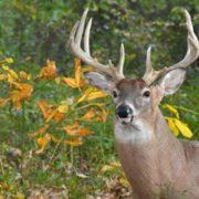 Charming deer